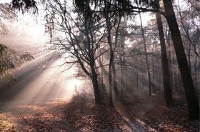 winterzon in het zandbos